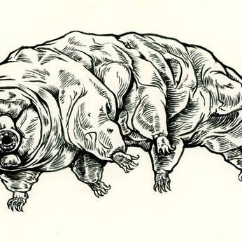 Version sm tardigrade