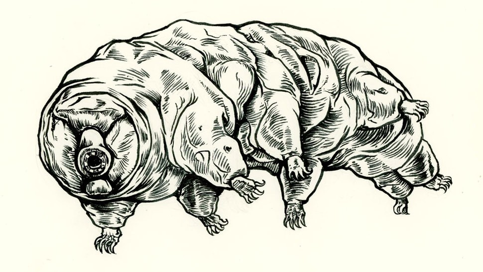 Version lg tardigrade